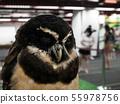 Black Owl furry. 55978756