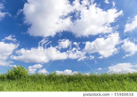 藍天,雲彩和草原背景材料 55980638