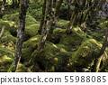 (나가노 현) 白駒의 연못 이끼의 숲 55988085