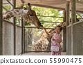 child girl feeding a giraffe 55990475