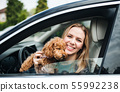 Young woman driver with a dog sitting in car, looking out of window. 55992238