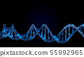DNA code. Abstract 3d polygonal wireframe DNA. 55992965