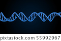 DNA code. Abstract 3d polygonal wireframe DNA. 55992967