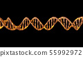 DNA code. Abstract 3d polygonal wireframe DNA. 55992972