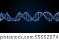 DNA code. Abstract 3d polygonal wireframe DNA. 55992974