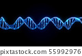 DNA code. Abstract 3d polygonal wireframe DNA. 55992976