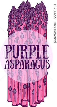 Purple asparagus hand drawn vector illustration 55993451