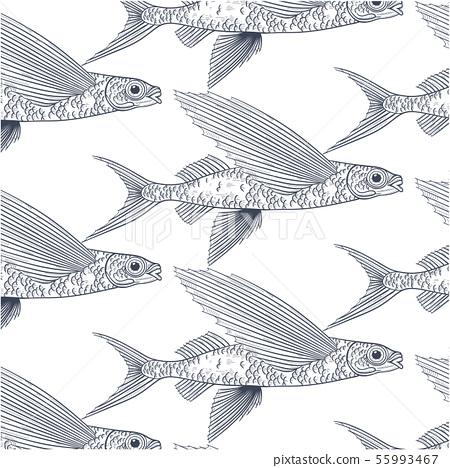 Exocoetidae or Flying fish hand drawing 55993467