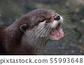 Otter portrait 55993648
