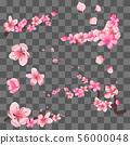 Spring sakura cherry blooming flowers, pink petals and branches isolated on transparent background 56000048