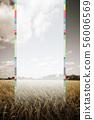 韓國,稻穀,大米 56006569