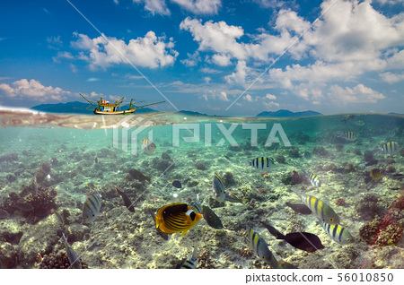 Underwater Scene With Reef And Tropical Fish 56010850