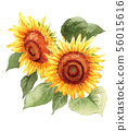A large sunflower painted in watercolor 56015616