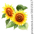 A large sunflower painted in watercolor 56015617