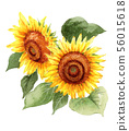 A large sunflower painted in watercolor 56015618