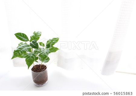Bright houseplant 56015863