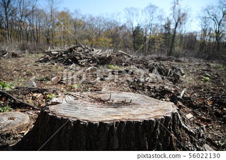 deforestation 56022130