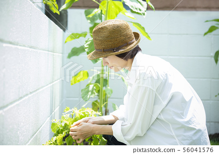 Female kitchen garden 56041576