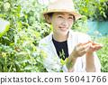 女性收穫蕃茄領域 56041766