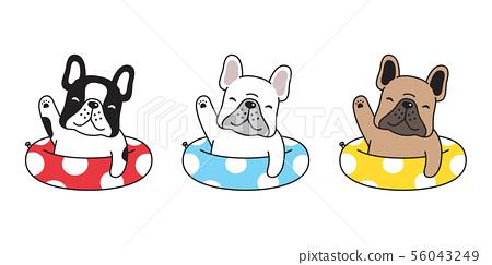 dog vector french bulldog icon swimming ring pool  56043249