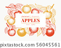 Apple branch design template. Hand drawn vector 56045561