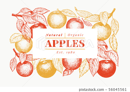 Apple branch design template. Hand drawn vector 56045561