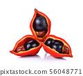 sweet chestnuts (Sterculia monosperma) on white 56048771