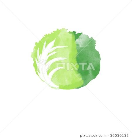 Lettuce watercolor 56050155