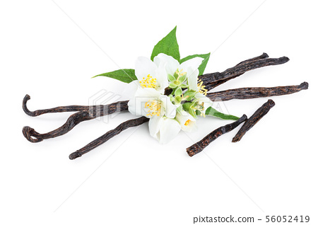 Vanilla sticks with flower and leaf isolated on white background 56052419