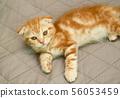 고양이 일상 56053459