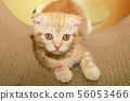 고양이 일상 56053466