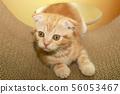 고양이 일상 56053467