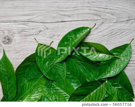 여름 잎사귀 배경, 잎사귀와 물방울  56057716