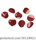 Chestnut isolated on white background 56128921