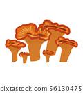 Omphalotus illudens, bright orangee cup mushroom 56130475
