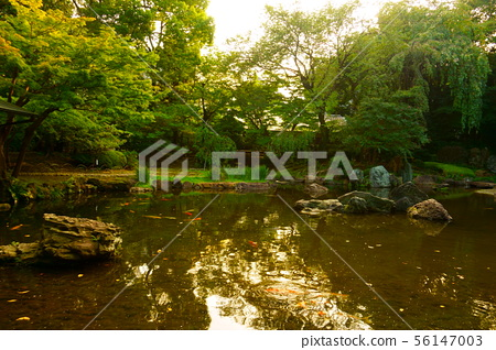 Evening, sunset in the city park. Tokyo 56147003