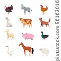 Cartoon farm animals and birds vector set isolated. Sheep, goat, cow, donkey, horse, pig, duck 56163016