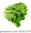 fresh chinese cabbage on a white background 56181574