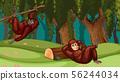 orangutans in jungle scene 56244034