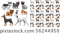 Seamless and isolated animal pattern cartoon 56244950
