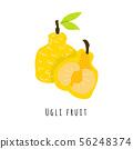 Ugli fruit flat vector illustration 56248374