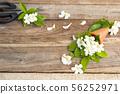white flowers jasmine local flora of asia in cone  56252971