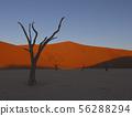 Dead camelthorn trees sitting in a salt pan in Deadvlie 56288294
