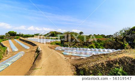밭 (봄) 56319547