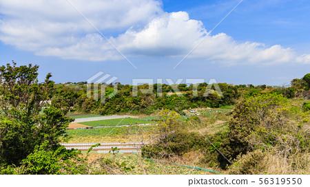 밭 (봄) 56319550