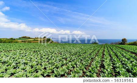 밭 (봄) 56319561