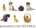 Cats, ducklings and hedgehog on a white 56319812