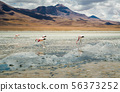 Flamingos in the lake 56373252