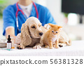 Vet with dog and cat. Puppy and kitten at doctor. 56381328