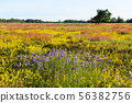 Beautiful colors by summertime in a swedish nature 56382756